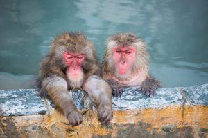 お猿さんのイメージ画像