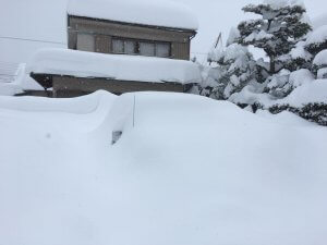 雪に埋もれた車の様子