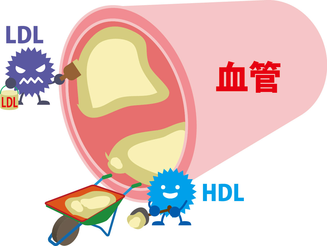 コレステロールのイメージ画像