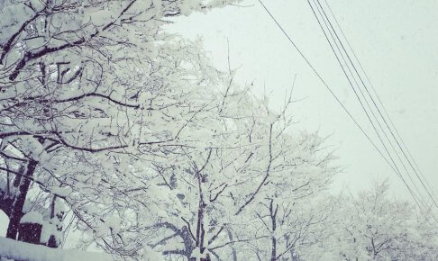 2月の足羽川の桜の様子