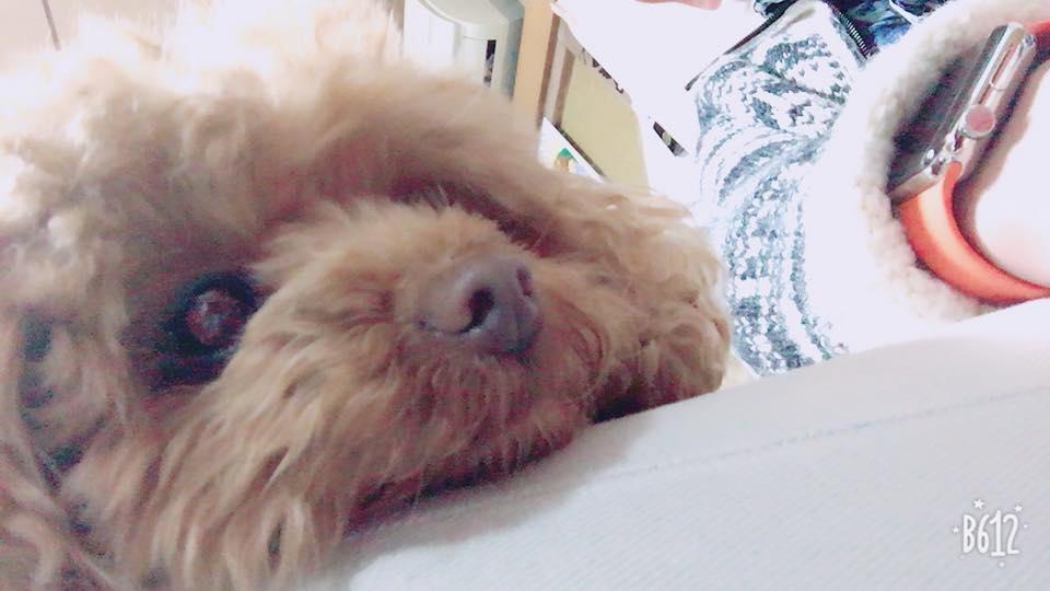 飼い犬のラン
