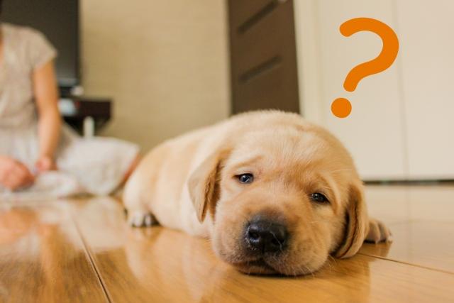 不思議がる犬の様子 イメージ画像