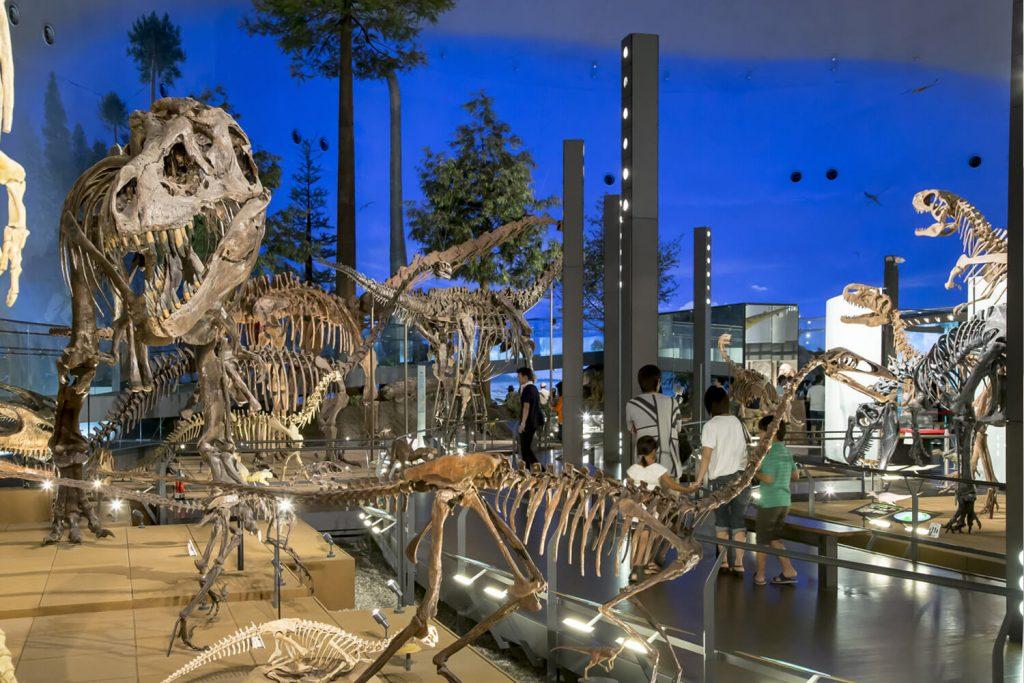 恐竜博物館のイメージ画像